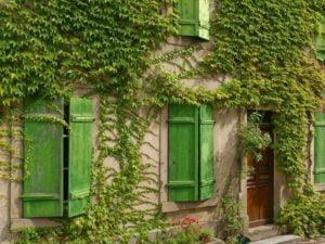 plantes_grimpantes_maison